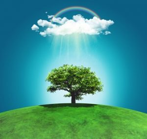 la importancia de ser responsable con el medio ambiente