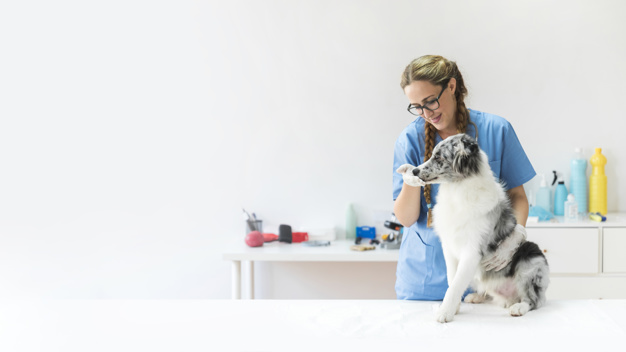 virtual pbx for veterinarians